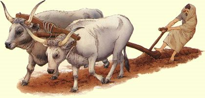 Etruscan oxen and plough